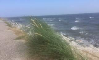 Beach grass on Norderney North Sea